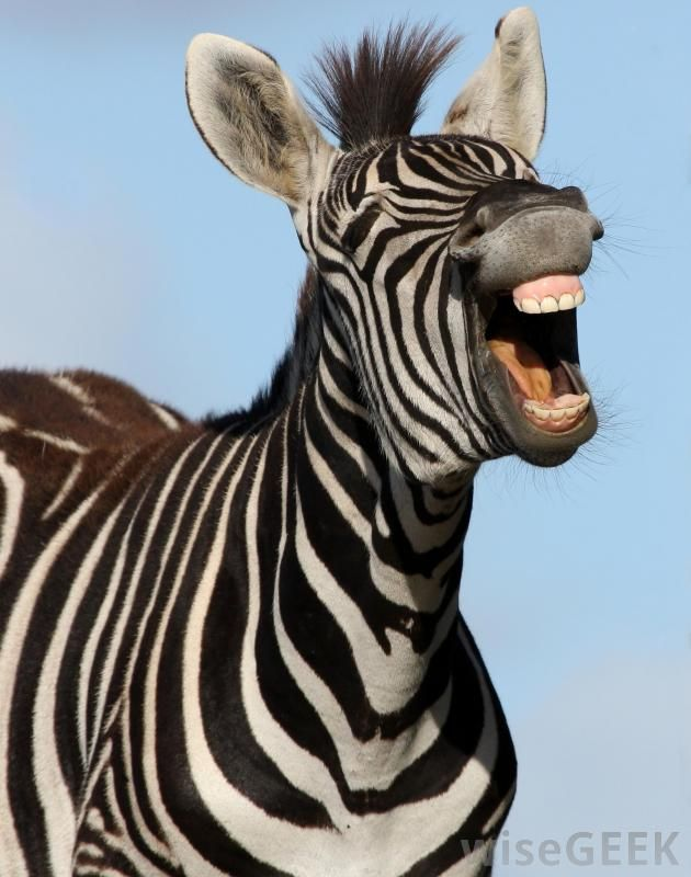 Do Animals Laugh? (with pictures)