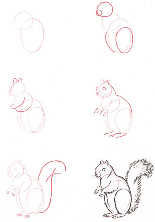 Learn to draw: Squirrel