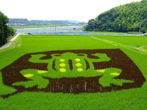 Rice field art designs have been created in the Inakadate Village, Japan since 1993 as part of a local revitalization project. W/yellow and black rice.