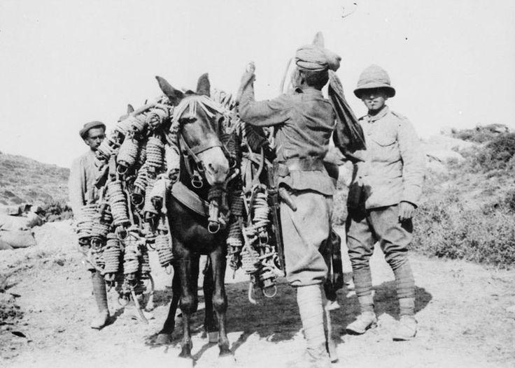 Bir paket katır, Gallipoli, 1915 yükleniyor Hint sürücüsü.