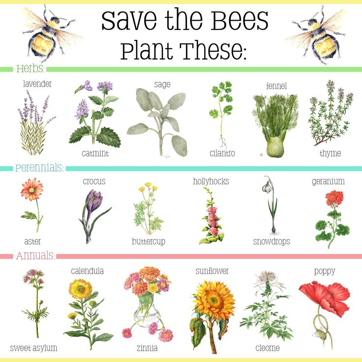 The 25 Best Keep Bees Away Ideas On Pinterest Bounce Sheets Bee Friendly Flowers And Flowers