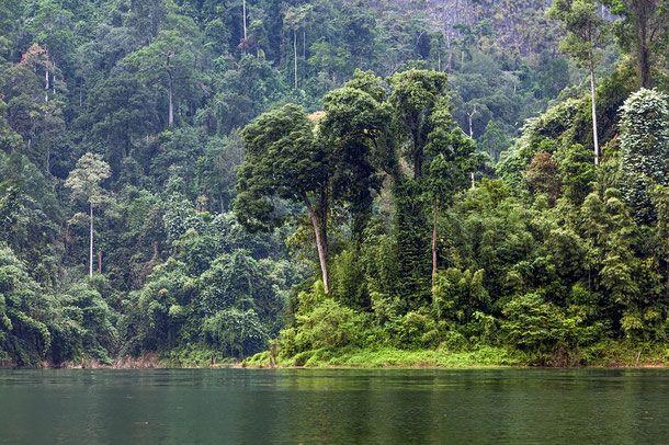 Khao Sok National Park - Provinz Surat Thani - Thailand