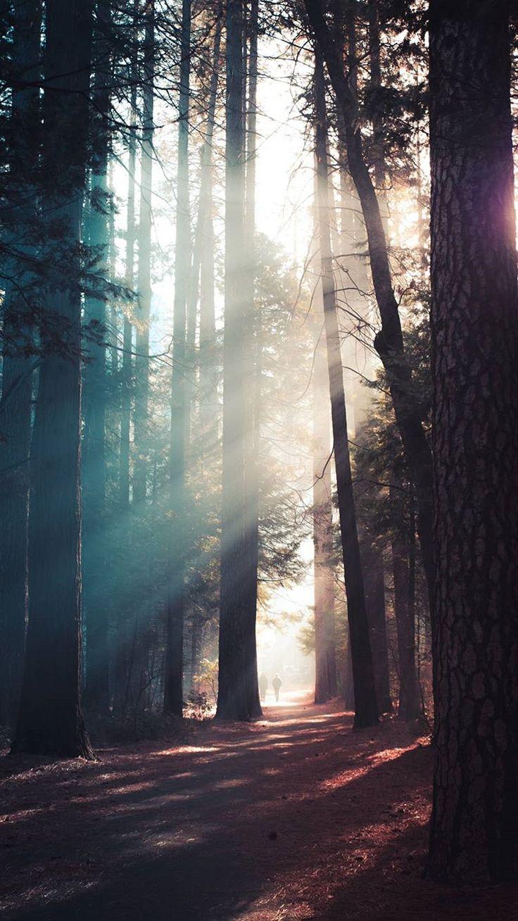 🌞Cute Forest Sunlight Wallpaper💖