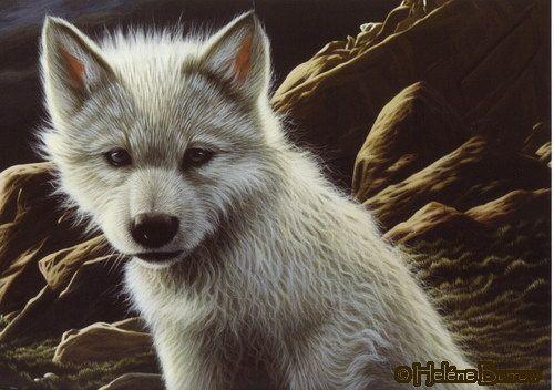 42 Best images about u-ne-ga-wa-ya(White Wolf) on ... - photo#2