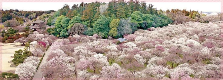 Kairaku-en (偕楽園?)  - The Kairakuen was struck by the Great Eastern Japan Earthquake and had been undergoing repairs.