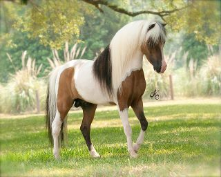 Awesome markings! This horse should be a Bryer Horse.