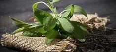 Comment soigner l'eczéma par les plantes ? les remèdes naturels pour se débarrasser de l'exema