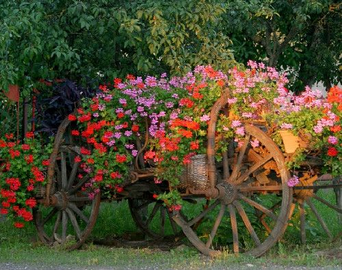 I must find an old wagon! How gorgeous is this!