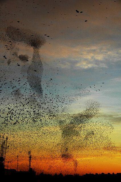 In the Distance, by Disar via Flikr #rainbows #birds