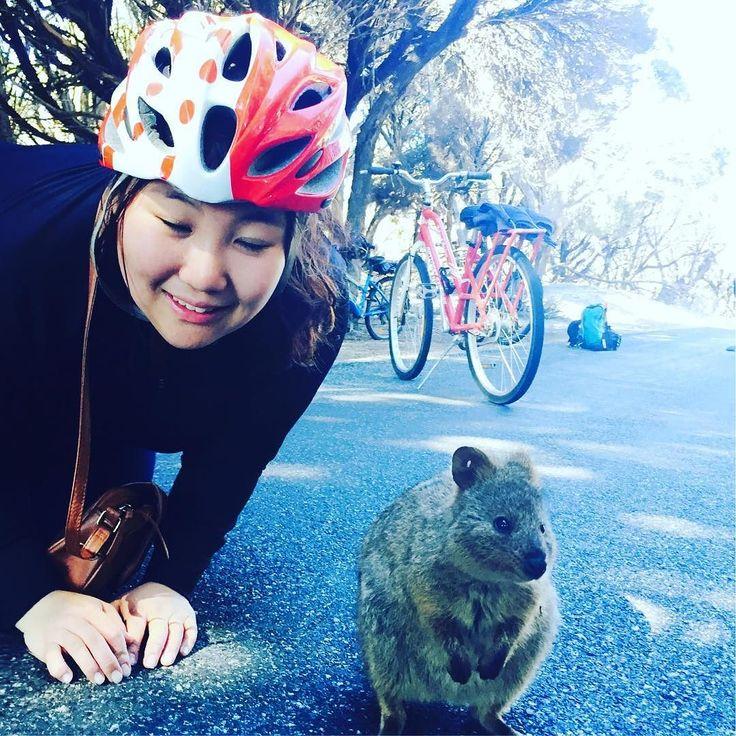 With quakka.#쿼카#rottnestisland#perth#australia#memory#happyholidays#travel#추억#여행#호주#퍼스#행복#삶#로트네스트 #quakka#소통 by min_nie_k http://ift.tt/1L5GqLp