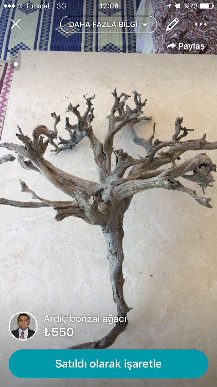 Süslük, hediyelik Bonsai ağacı. 30 yaşında 550 TL. 0505 957 8311