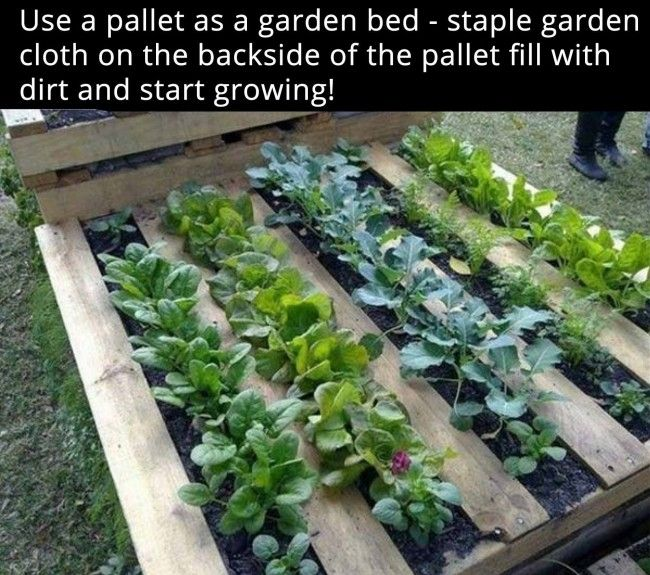 got pallets dont feel like turning up a bunch of grass use a pallet as a garden bed staple garden cloth on the backside of the pallet fill with dirt - Vegetable Garden Ideas For Spring