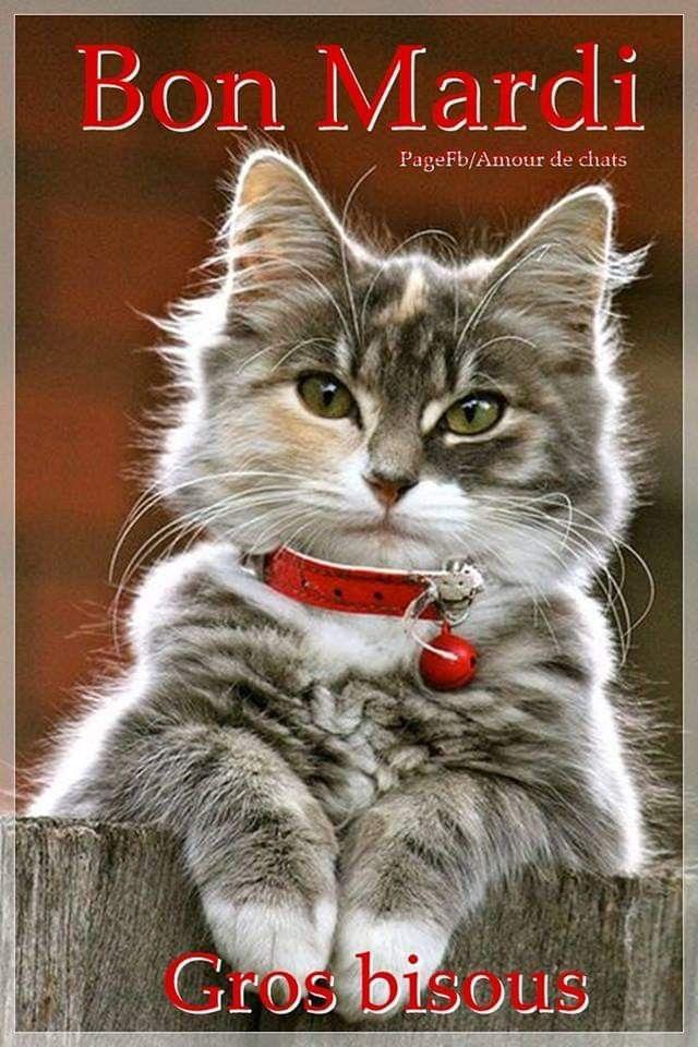 Épinglé par Mazef Anita sur bon mardi | Bon mardi, Amour de chat, Gros  bisous