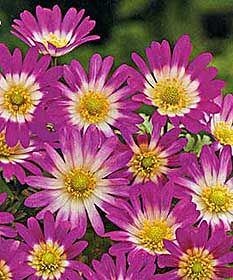 199 Best Images About Flowers On Pinterest Gerber Daisies Auction And Beautiful Flowers