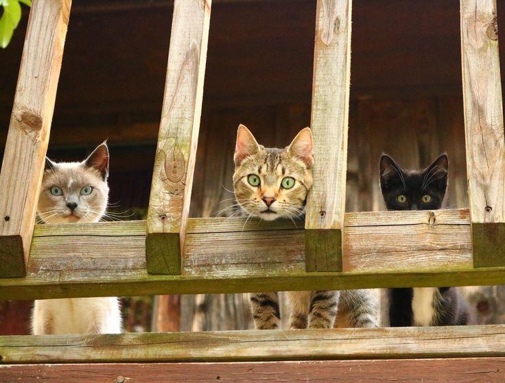 I always feel like somebody's watching me. http://ift.tt/2tzZcVN