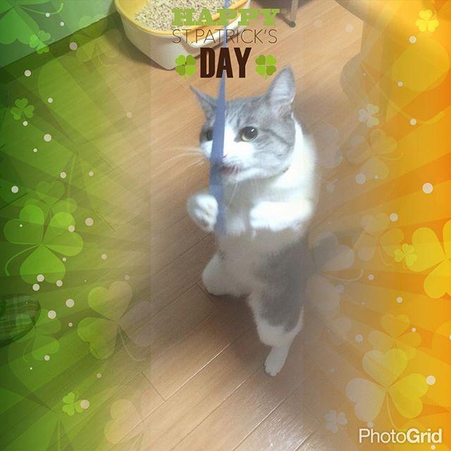 Good morning #作家 #児童書 #児童文学作家 #本 #cat #Ilovecat #猫 #猫好き #猫love #猫と暮らす #猫がいる幸せ #多頭飼い #シルバーマッカレルタビー #3才shiiko2222016/03/17 06:44:51
