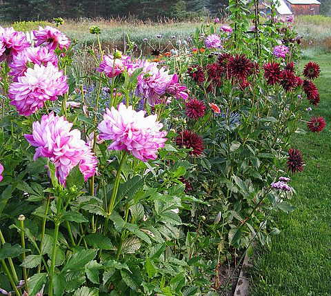 15 best food garden design images on pinterest gardening for Gardeners supply canada