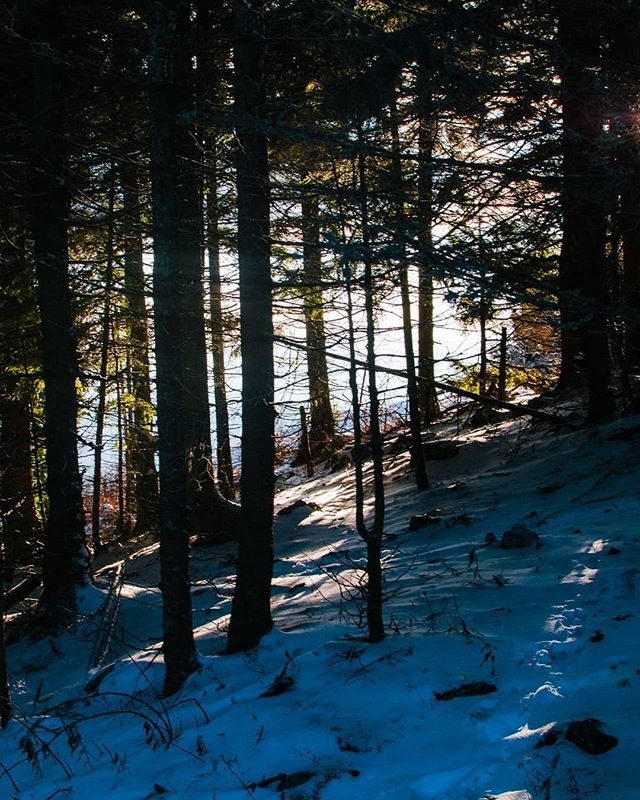 Mountain Trees . . .  #nature #beauty #beautiful #tree #pretty #landscape #winter #season #cold #snow #ice #snowflakes #photooftheday #smile #picoftheday #pictureoftheday #photography #photo #photos #picture #nikon #d5300 #schöckl #graz #shade #sunny #tree