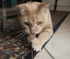 Find out how to stop a cat from chewing cords, houseplants and other dangerous household items. Plus, learn when his chewing could be a sign of OCD.