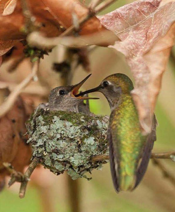 Baby hummingbird | In The Leafy Treetops;;;; | Pinterest