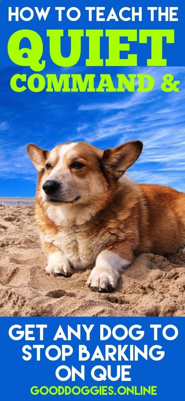 Pupy Training Treats Want Know How To Stop Dog Barking Teach