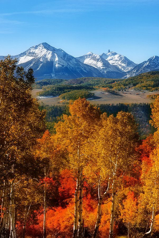 Best Scenic Drives in Colorado to Check Out the Changing Leaves