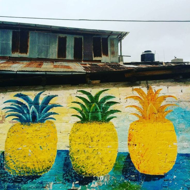 The future is always beginning now. 🍍 - Mark Strand    Happy Solstice friends!   #aanincollective #walltraveled #quotestoliveby #quote #pineapples  #streetart #summer #solstice #womenempoweringwomen #amazonrainforest #igersperu #liveauthentic #fashionista