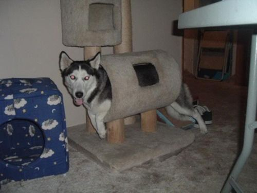 silly kitty: Animal Pics, Dogs Pics, Funny Dogs, Funny Animal Pictures, Funny Cat, Cat Trees, Funny Puppies, Dogs Funny, Moon Moon