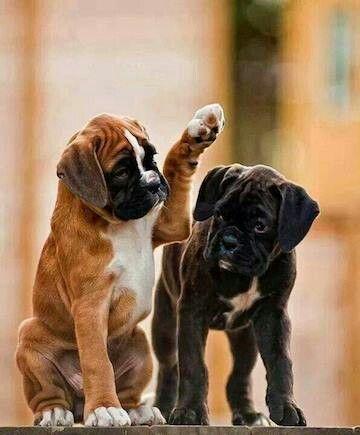 Cute! 5 reasons dogs are man's best friend! #DogsRule! http://wisepuppy.com/mansbestfriend