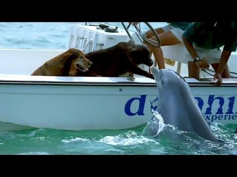 Dolphin Kisses! | The Animal Rescue Site Blog