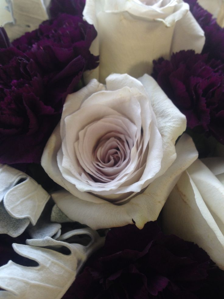 Earl Grey Rose With Moon Vista Carnations And Dusty Miller