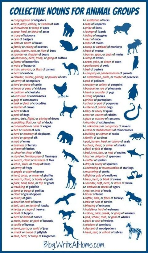 Collective nouns for animal groups by blogrightathome #Animals #Collective_Nouns