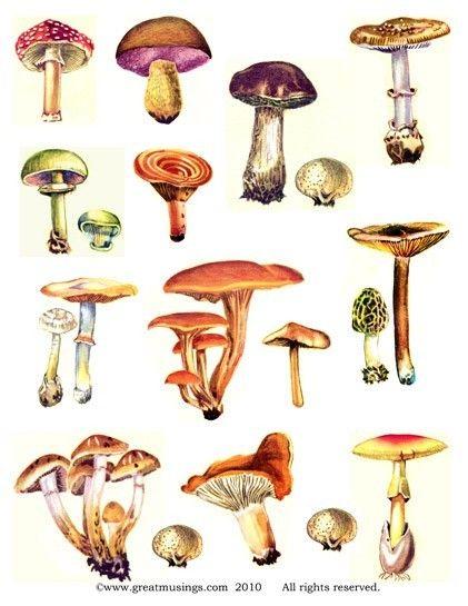 Mushrooms Fungi Digital Collage Sheet No 308 by GreatMusings, $2.75
