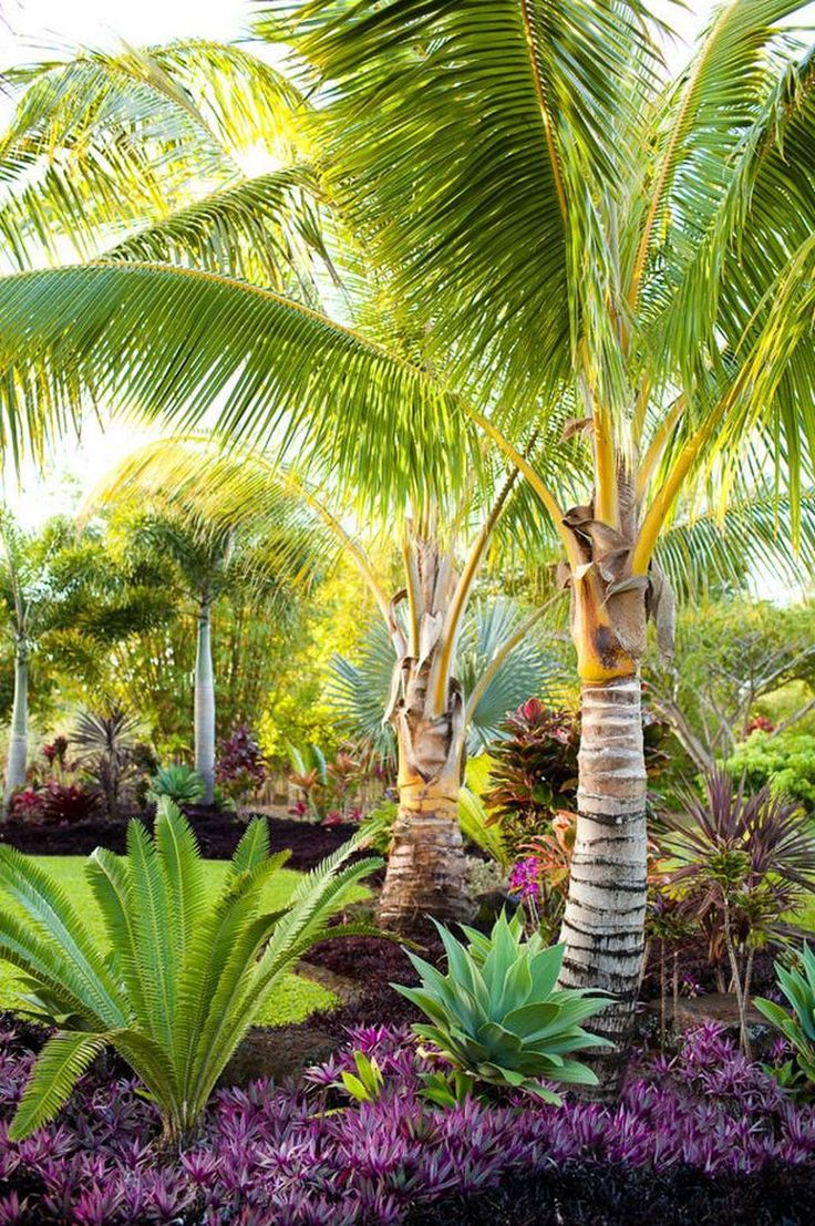 best 25 tropical backyard landscaping ideas on pinterest