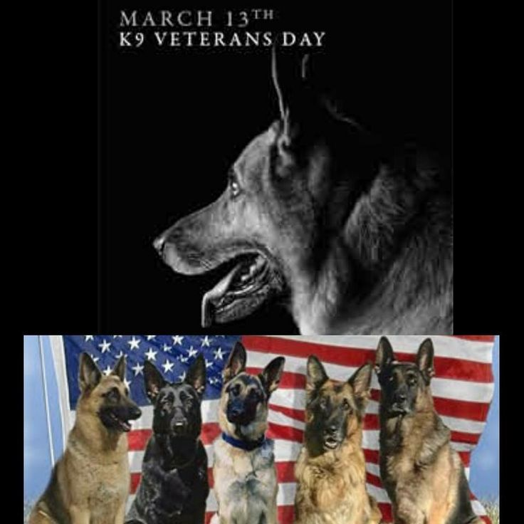 K9 veterans day military dogs veterans day war dogs