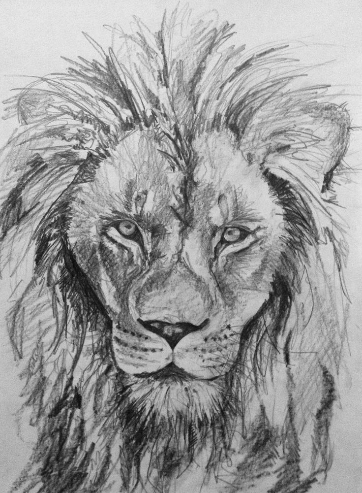 10 Best images about My drawings on Pinterest | Bull ...