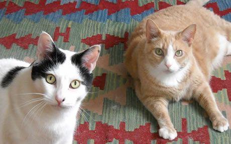 Holistic Homemade Cat Food Recipes