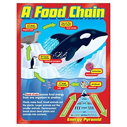 POSTER: Depicts a marine life example of a food chain ...