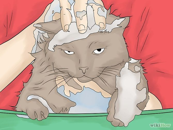Do you know effective treatment of Cat fleas and tick?