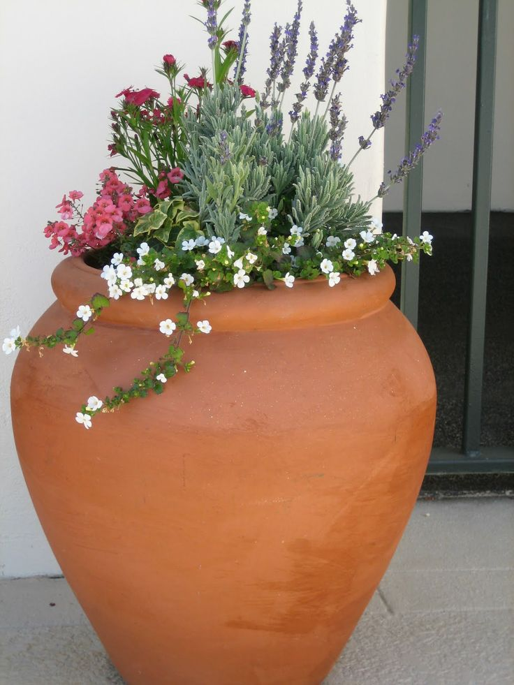 Containers with lavendula... Meditteranean planter: French Lavender, Bacopa , Dianthus ...love