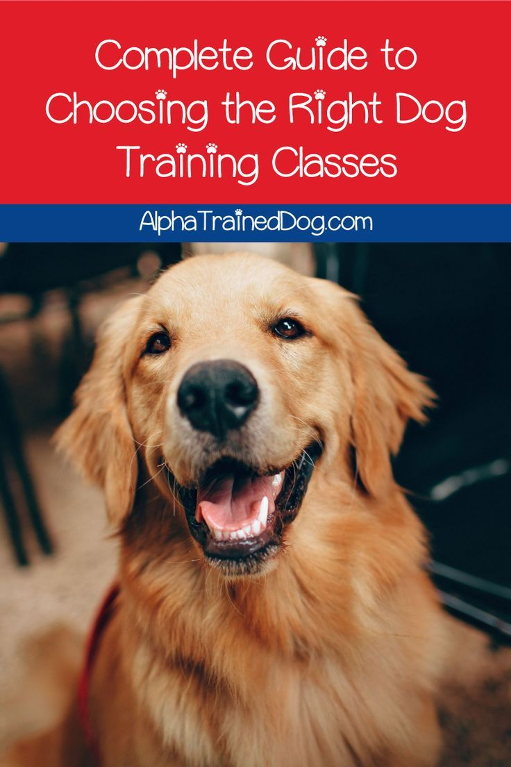 Need Some Help Choosing The Best Dog Training Classes Read On For