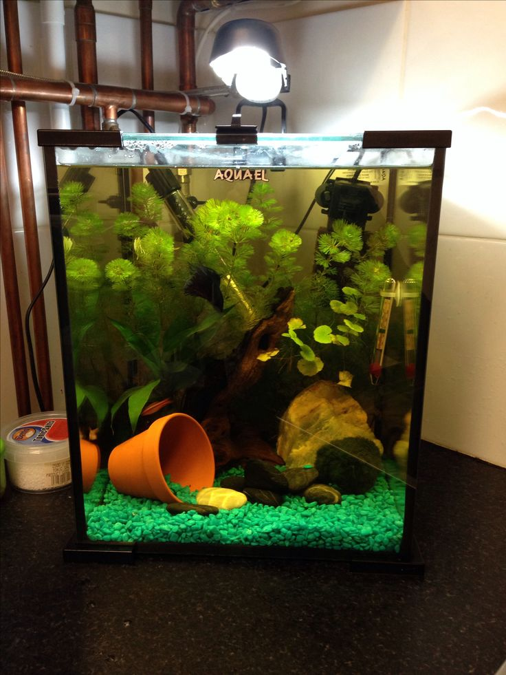 Fish products aquarium ideas betta and aquariums for Betta fish tank ideas
