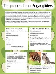sugar glider food recipe - Google Search