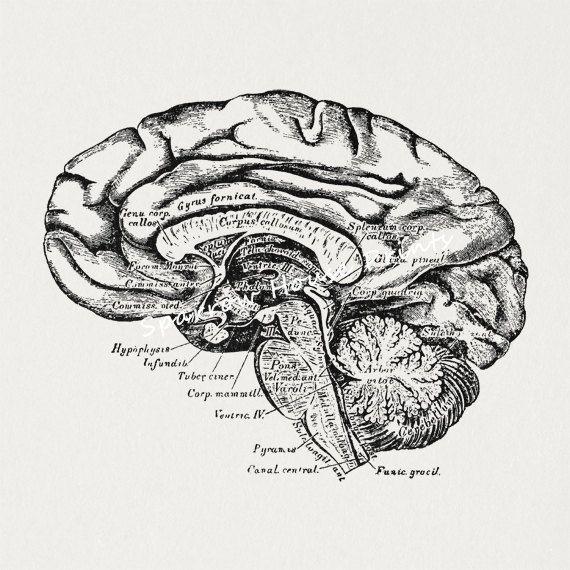 19 best vintage science illustrations images on pinterest