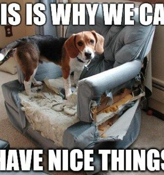 11 Dog Memes: This is Why We Can't Have Nice Things
