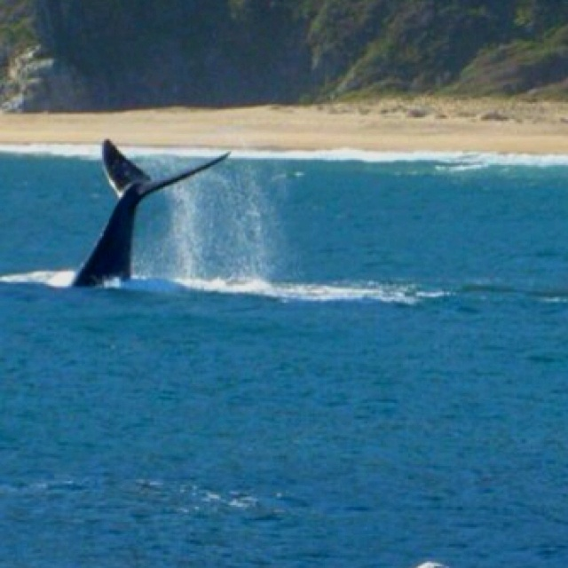 Whale in Quintay