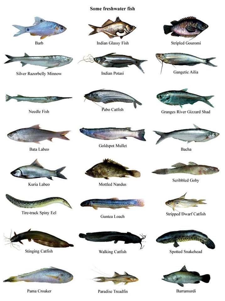 Acuario3web Acuario3web Twitter Animals Name In English Types Of Fish Goldfish Types