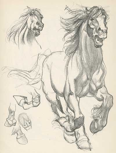 draft horse sketches by Willy Pogany
