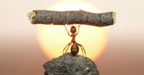 Δεν έχει σημασία αν δεν έχετε κανένα μυρμήγκι ακόμα στο σπίτι σας ή αν έχετε παρατηρήσει καμιά δεκαριά διάσπαρτα στο πάτωμα. Η πρόληψη είναι η καλύτερη λύσ