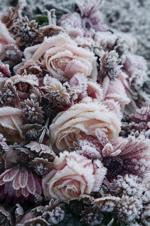 love this Texture, frosted flowers. Makes me want to design a textile print of it